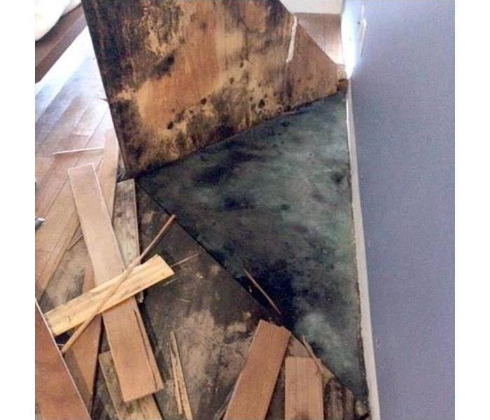 Mold Remediation Mold damage can be sneaky!