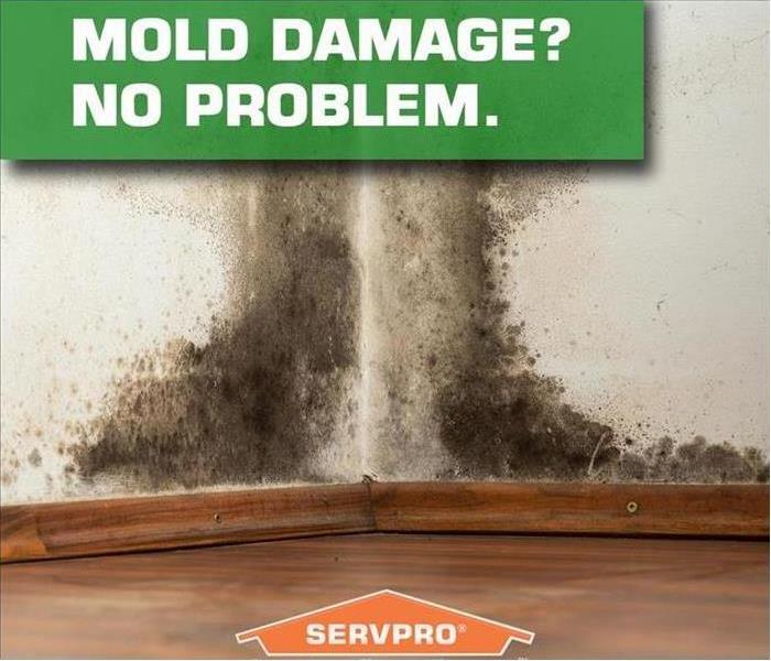 Mold Remediation Need Answers? Why Mold Removal May Not Be an Ideal DIY Project